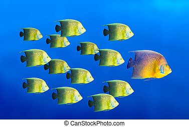 Leadership concept - big fish leading school of tropical fishes