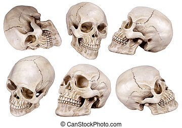 skull - Human skull cranium set isolated on white background...