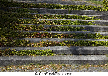 Ancient Stairs with invasive vegatation  - Ancient Stairs