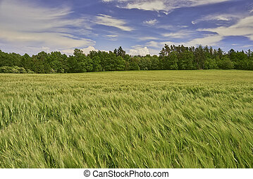 Agricultural landscape - View on agricultural landscape with...