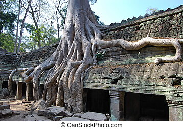 Doubling of roots Ta Prohm temple