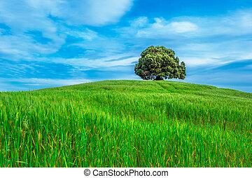 tree in the green field