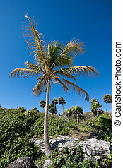 Palm tree on the rock
