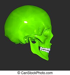 skull - The skull is a bony structure in the head of most...