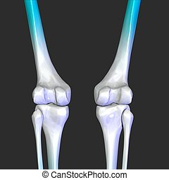 leg knee joint - The knee joint joins the thigh with the leg...
