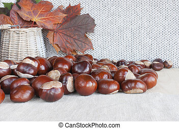 Horse chestnuts or conkers on the table, basket with autumn...