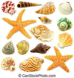 Sea shells - Assortment of sea shells individually isolated...