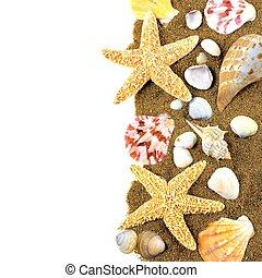 Seashell border - Vertical border of various seashells and...