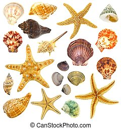 Isolated sea shells - Large Assortment of sea shells...