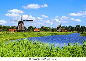 campo, holandês