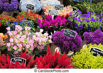Flower market - Flowers for sale at a Dutch flower market