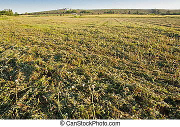 Alfalfa field just cut - A view of an alfalfa field just...