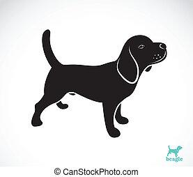 vetorial, imagem, beagle, cão