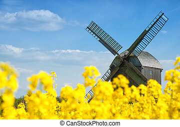 Old windmill in a field of rapeseed