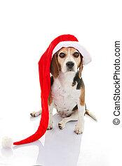 pet dog christmas holiday gift or present