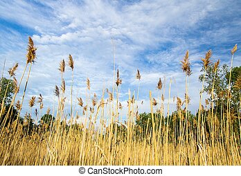 Save The Wetlands - Marsh grass blows in the breeze set...