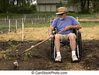 wheelchair gardening - disabled man in a wheelchair weeding...