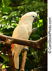 Parrot - A parrot on a branch feeding
