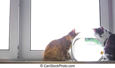 cat at the window - cat sitting on the window and look at...