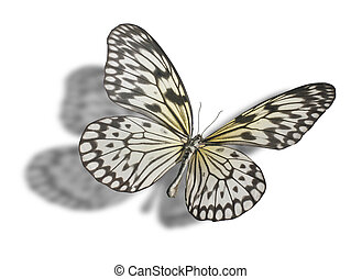Butterfly isolated on white. - Butterfly (Idea leuconoe,...