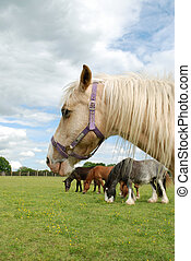 Rescue horse with friends at an animal sanctury