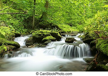 Forest stream surrounded by spring vegetation.