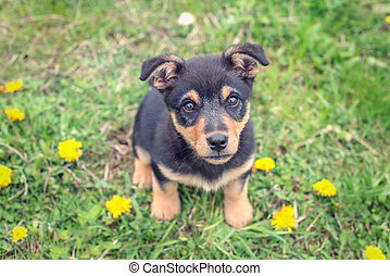 puppy - small puppy on green grass