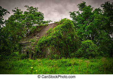 Old, Abandoned, Derelict, Ivy Covered Cabin - A very old,...
