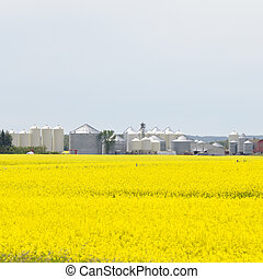 Grain silos canola rapeseed agriculture field - Large number...