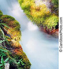 Small forest creek rushing mossy forest ground - Clean water...