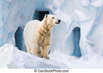Polar, bär,  zoo