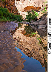 Pool of water - Hunter Canyon Hiking Trail Moab Utah -...