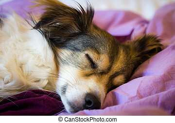 Sleeping dog on a bed