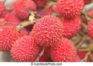 wild fruit from forest, wild lychee or Nephelium hypoleucum