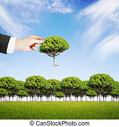hand puts a tree