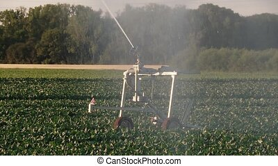 Industrial agriculture - sprinkler system - video footage of...