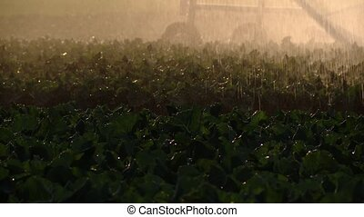 Watering a acre with a sprinkler sytem - sprinkler system...