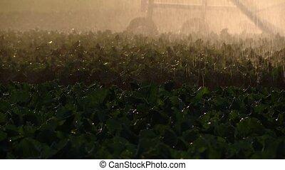 Watering a acre with a sprinkler sytem - sprinkler system...