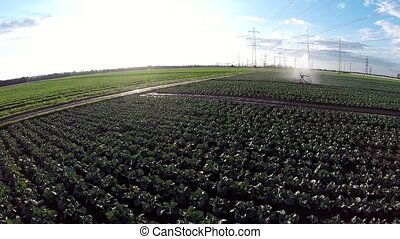 Aerial of a irrigation plant in germany - video footage...