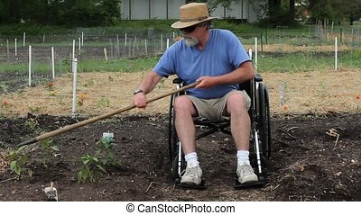hoeing the garden - disabled man in a wheelchair weeding his...