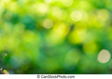 Sunny abstract green nature background, defocused blur...