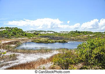 Dunas de Abrantes, Salvador de Bahia (Brazil) - Dunas de...