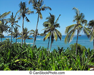 Coconut Palms and Banana leaves - Banana leaves and Coconut...