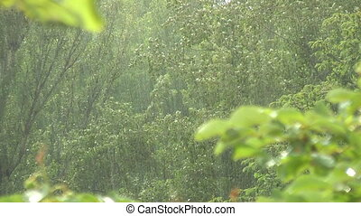 Rain, - summer rain