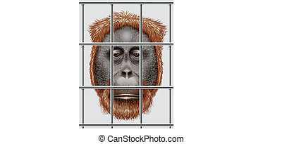 An endangered orangutan - Illustration of an endangered...