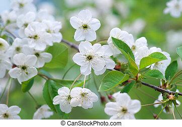 primavera, árbol, flor