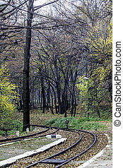 train tracks - Train tracks in the colorful autumn forest