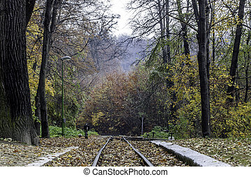 train tracks - Train track in the colorful autumn forest