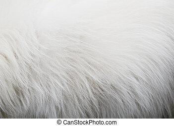 White dog hair texture