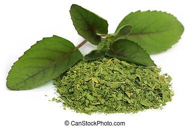 Medicinal holi basil or tulsi leaves
